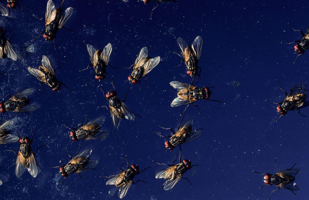 Diese 6 Hausmittel helfen gegen Fliegen