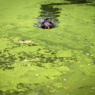 Teich mit Algen
