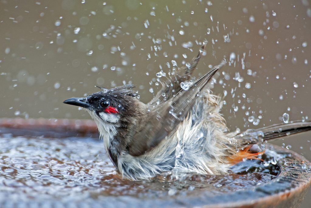 Vogeltränke für den Garten selber bauen – DIY-Anleitung