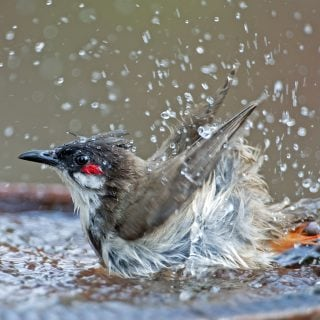 Vogeltränke
