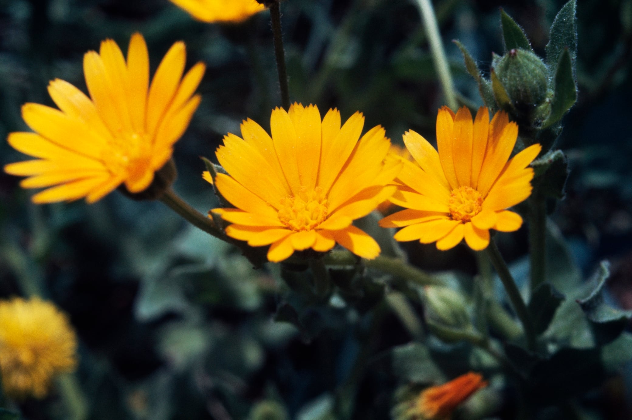 Diese Pflanzen Helfen Gegen Mücken Milben Und Pilze Myhomebook