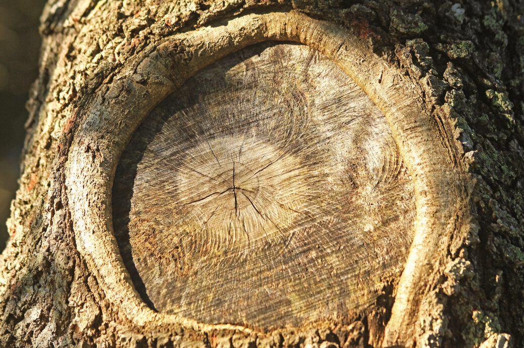 Atemberaubend Baumwunden behandeln: Verschließen oder nicht? - myHOMEBOOK &SH_75