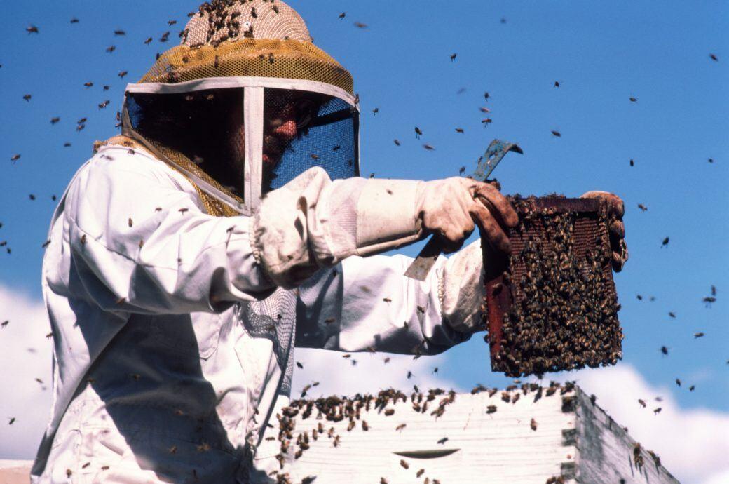 Bienen halten sollte man nur mit entsprechenden Vorkenntnissen