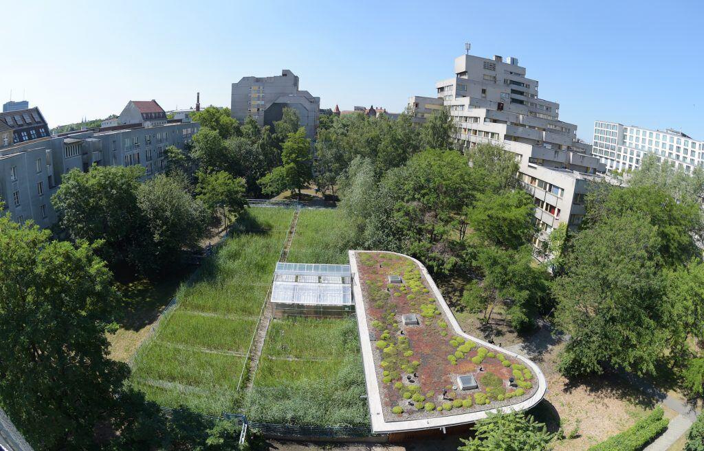 Schilf-Fläche und begrüntes Dach in Berlin