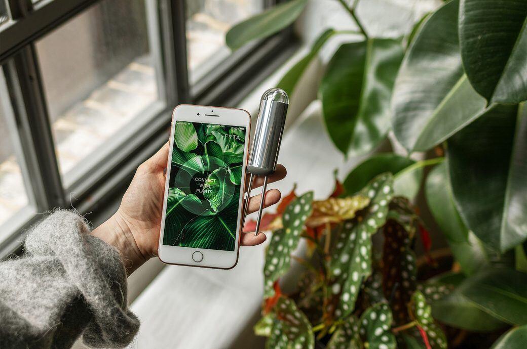 Der Sensor und die App von FYTA sollen Pflanzen davor bewahren einzugehen