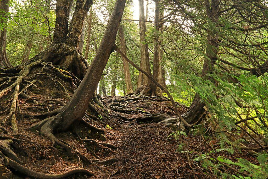 Mikroben zersetzen Laub, Nadeln, Gehölz und bringen zum Dank den Waldboden zum Duften