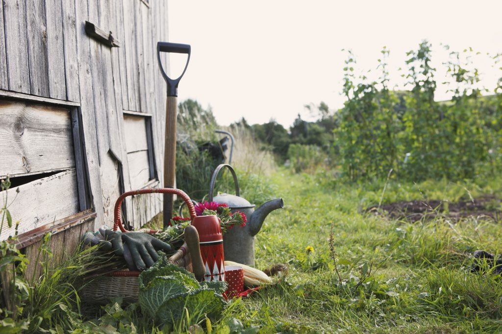 An einem Holzschuppen lehnen diverse Gartengeräte, wie Spaten, Gießkanne und Korb.