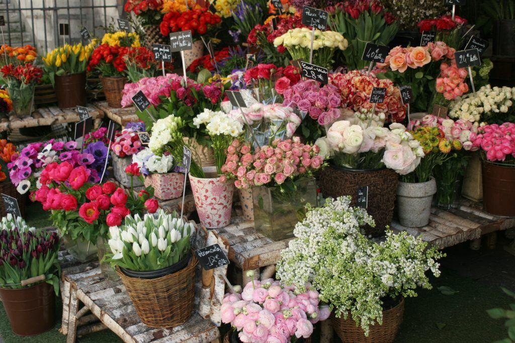 Blumenauswahl in einem Blumenladen