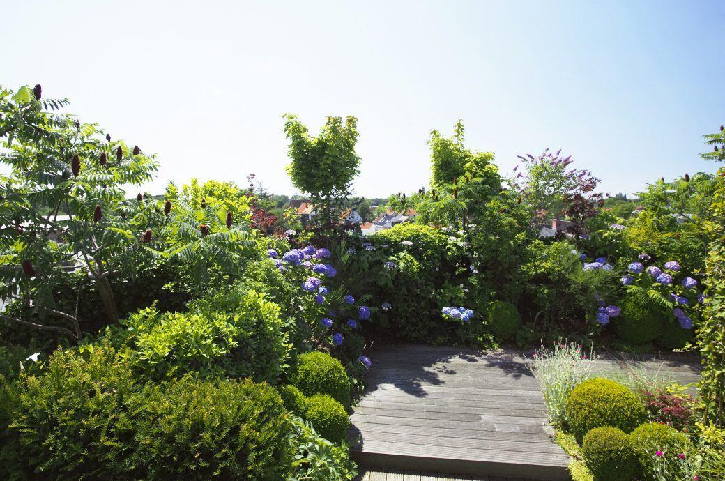 Dachgärten sind pflegeintensiv
