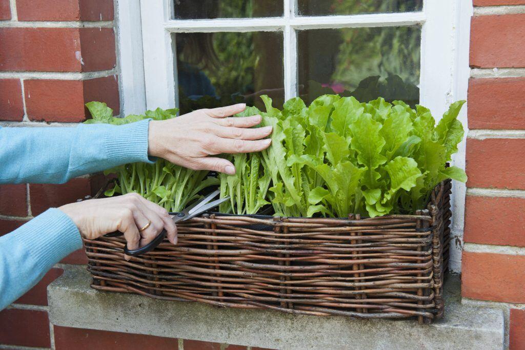 Balkonkästen können aus Weide selbst geflochten werden
