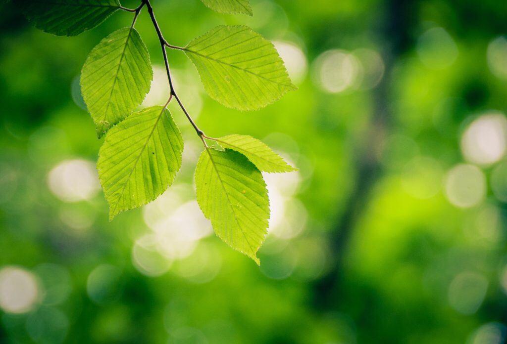 Erkennen Sie Baumarten nur anhand der Blätter?