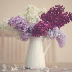 Weiße, violette und lilafarbene Fliederzweige befinden sich in einer weißen Blumenvase