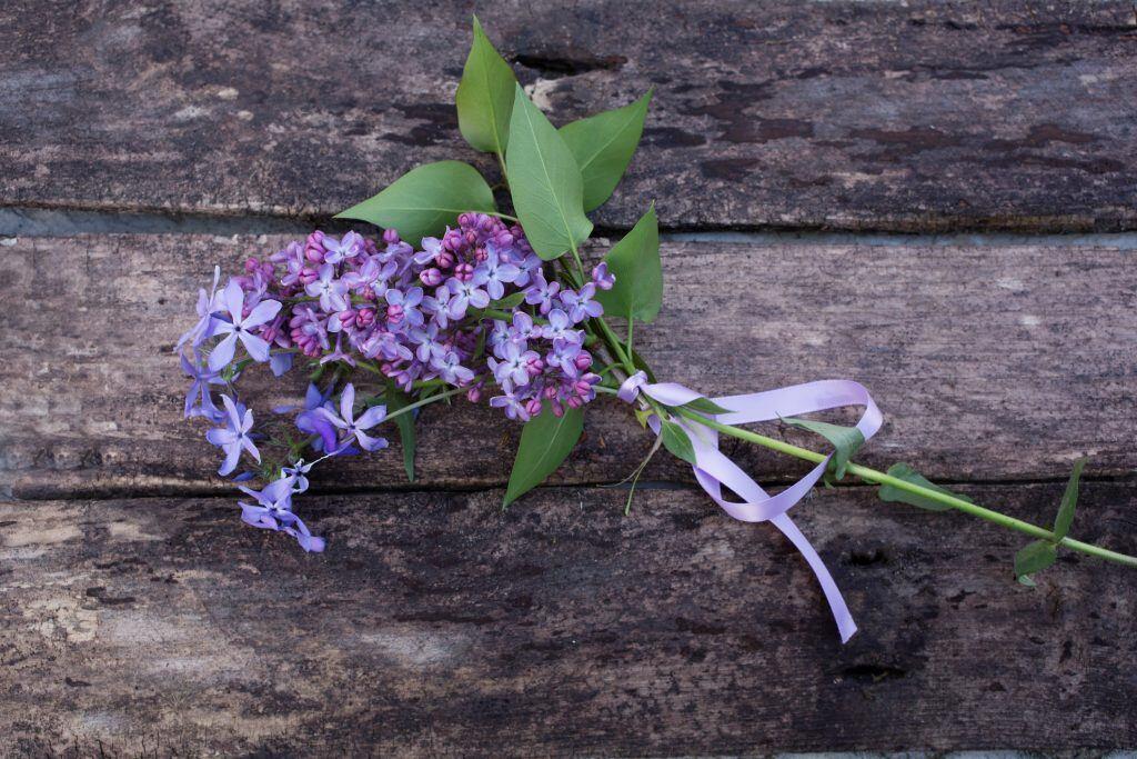 Fliederblüten und Blätter sind dekorativ mit einer Schleife zusammengebunden