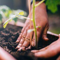 Welche Pflanzen brauchen Spezialerde und wann lohnt sich der Kauf wirklich?