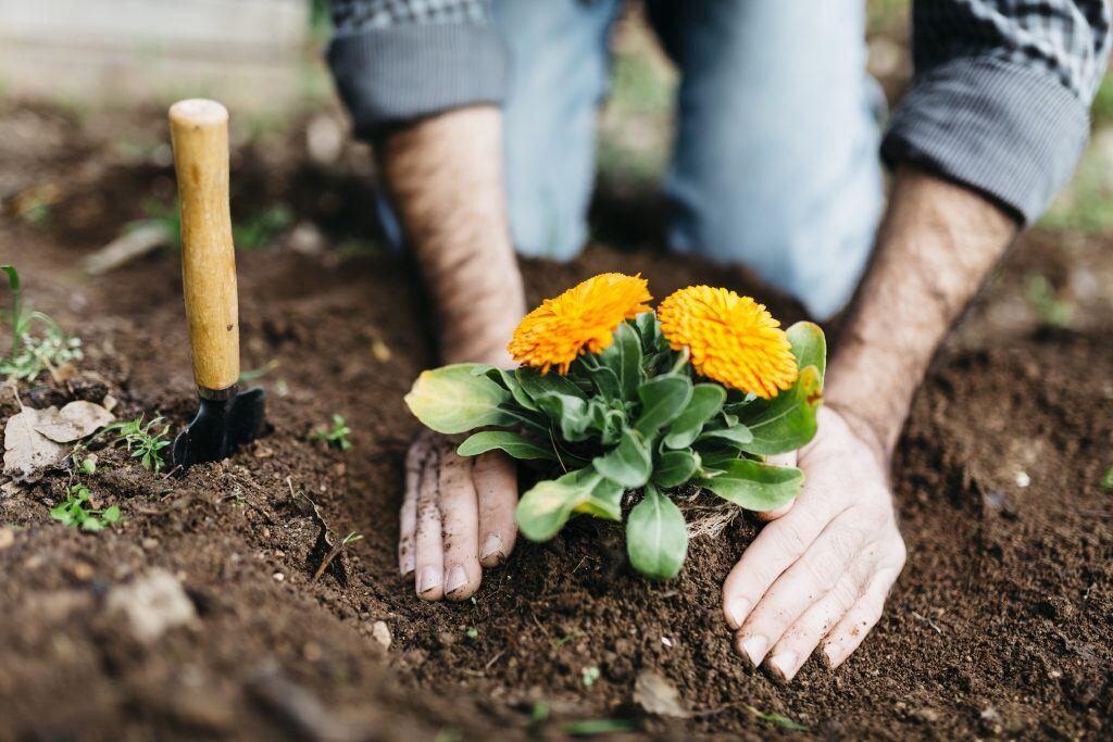 An diesem Indiz erkennen Sie hochwertige Blumenerde