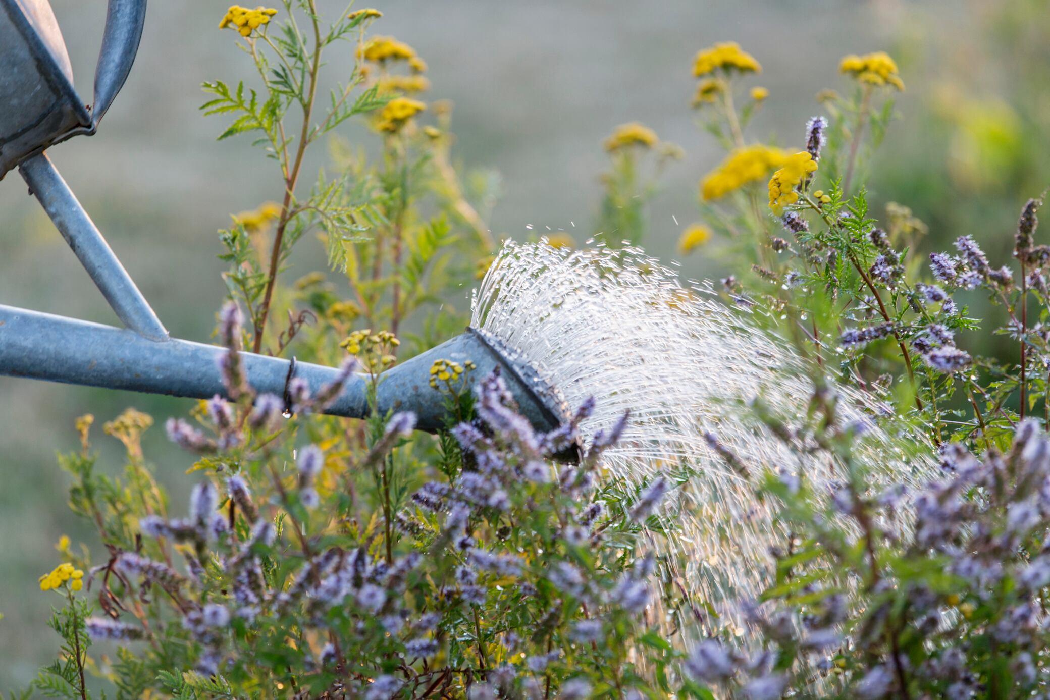 Wie Sie Ihre Pflanzen richtig gießen