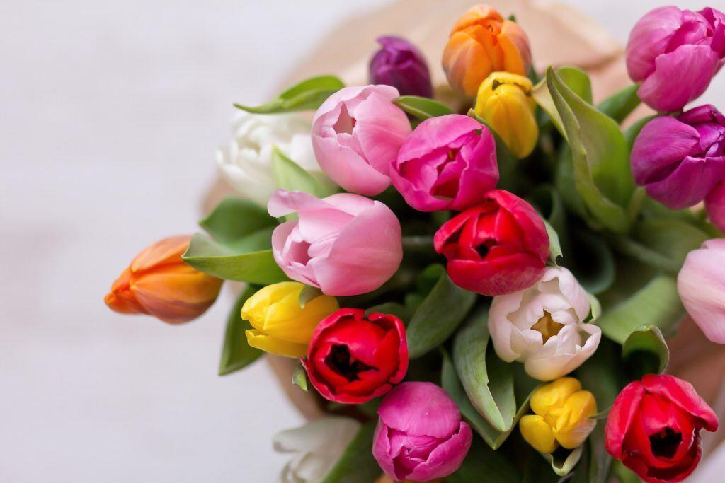 Die Bedeutung der Tulpe ähnelt sehr der Bedeutung der Rose