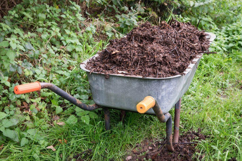 In einer Schubkarre befindet sich Komposterde