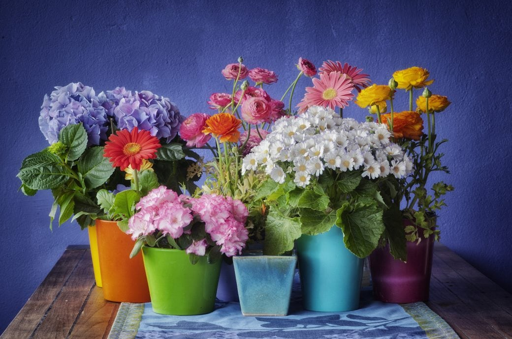 Jede Blumenart hat eine Bedeutung