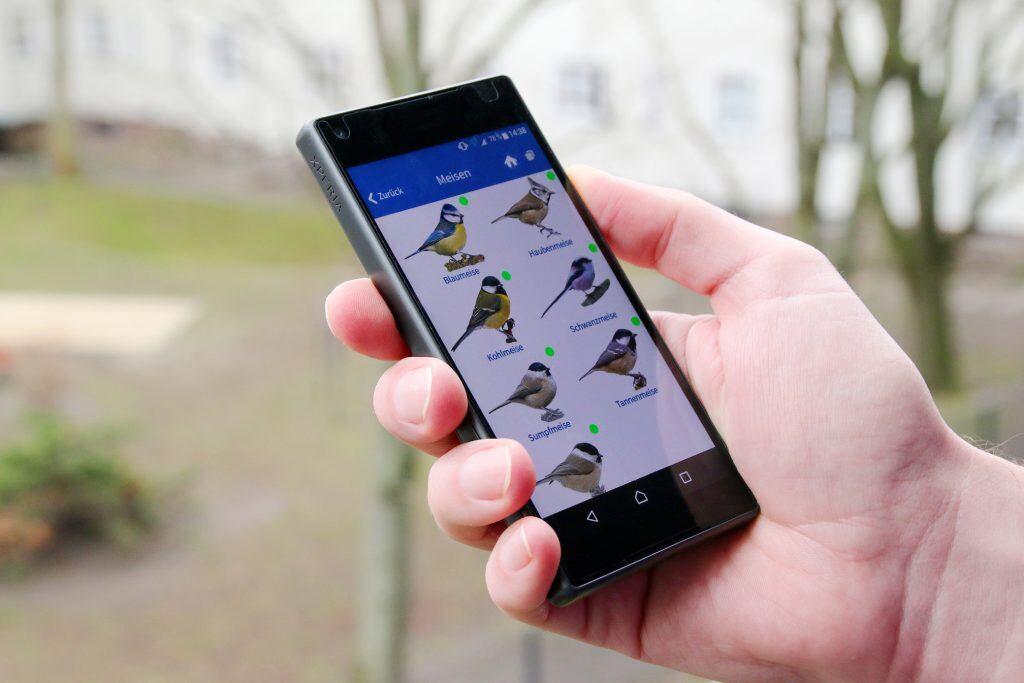 Blau, Kohl, Sumpf und Co.: Im Dschungel der Meisenarten hilft die Nabu-App «Vogelwelt» weiter.