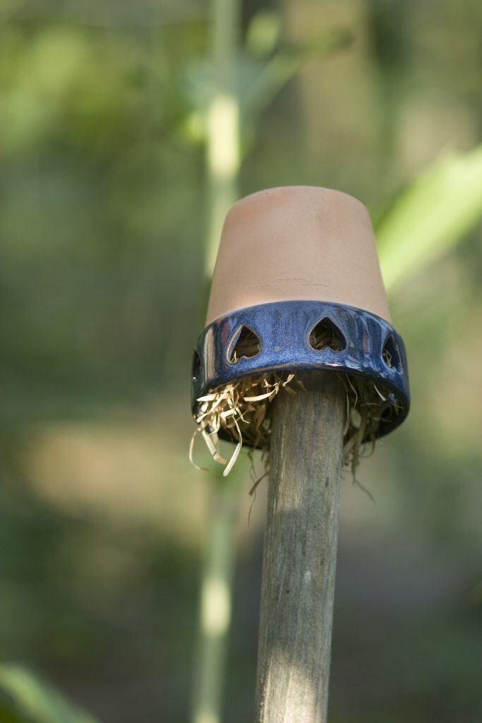 Ohrwürmer können Sie mit einer selbst gebauten Ohrwurm-Glocke anlocken