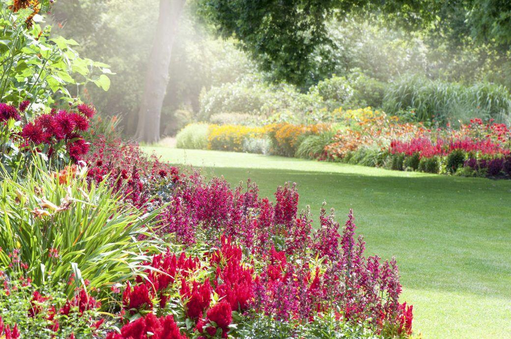 Außergewöhnlich Blumen für den Garten: Was blüht im August? - myHOMEBOOK &FB_68