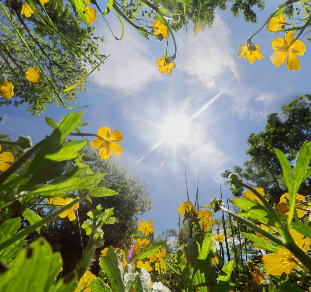 In 5 Schritten Ihre Pflanzen auf Hitze vorbereiten