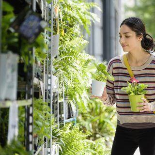 Woran erkennt man ökologische und nachhaltige Zierpflanzen?