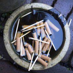 Nikotin als Pflanzenschutzmittel ist sehr giftig