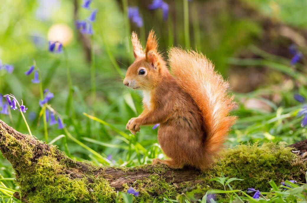 Eichhörnchen Im Garten : eichh rnchen im garten vor verdursten sch tzen myhomebook ~ Watch28wear.com Haus und Dekorationen