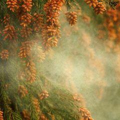 Mit welchen Bäumen und Pflanzen Sie Pollen abwehren können
