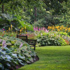Warum Ihr Garten Dunkelzonen braucht und wie Sie diese anlegen