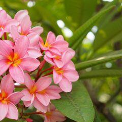 Pflanzen aus dem Urlaub mit nach Hause nehmen