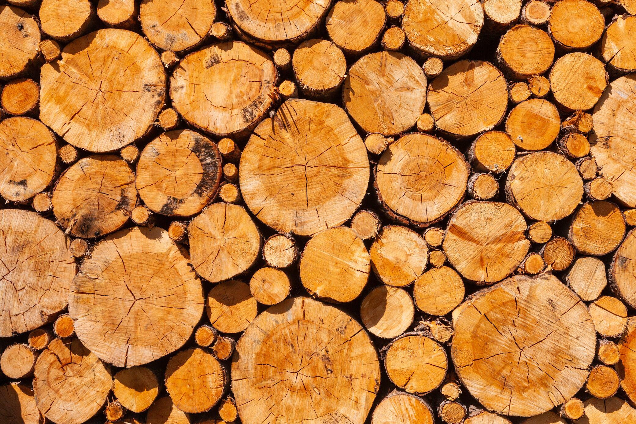 Können Sie Holzarten nur anhand eines Bildes erkennen?
