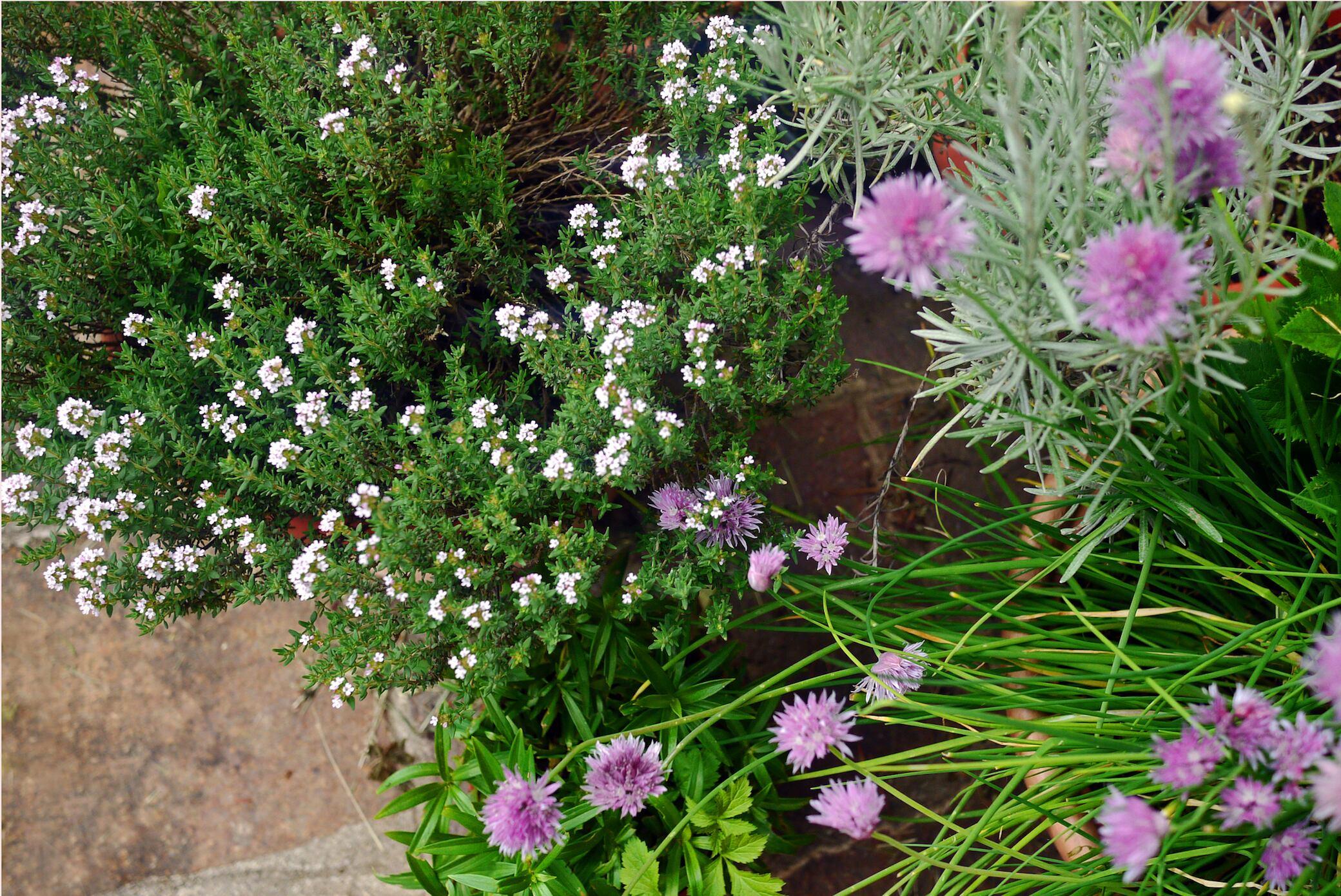 Hänge im Garten mit robusten Pflanzen besetzen