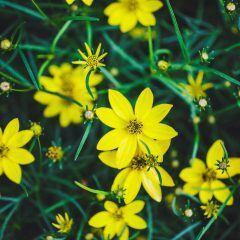 Gestresste Pflanzen blühen laut Forscherteam schneller
