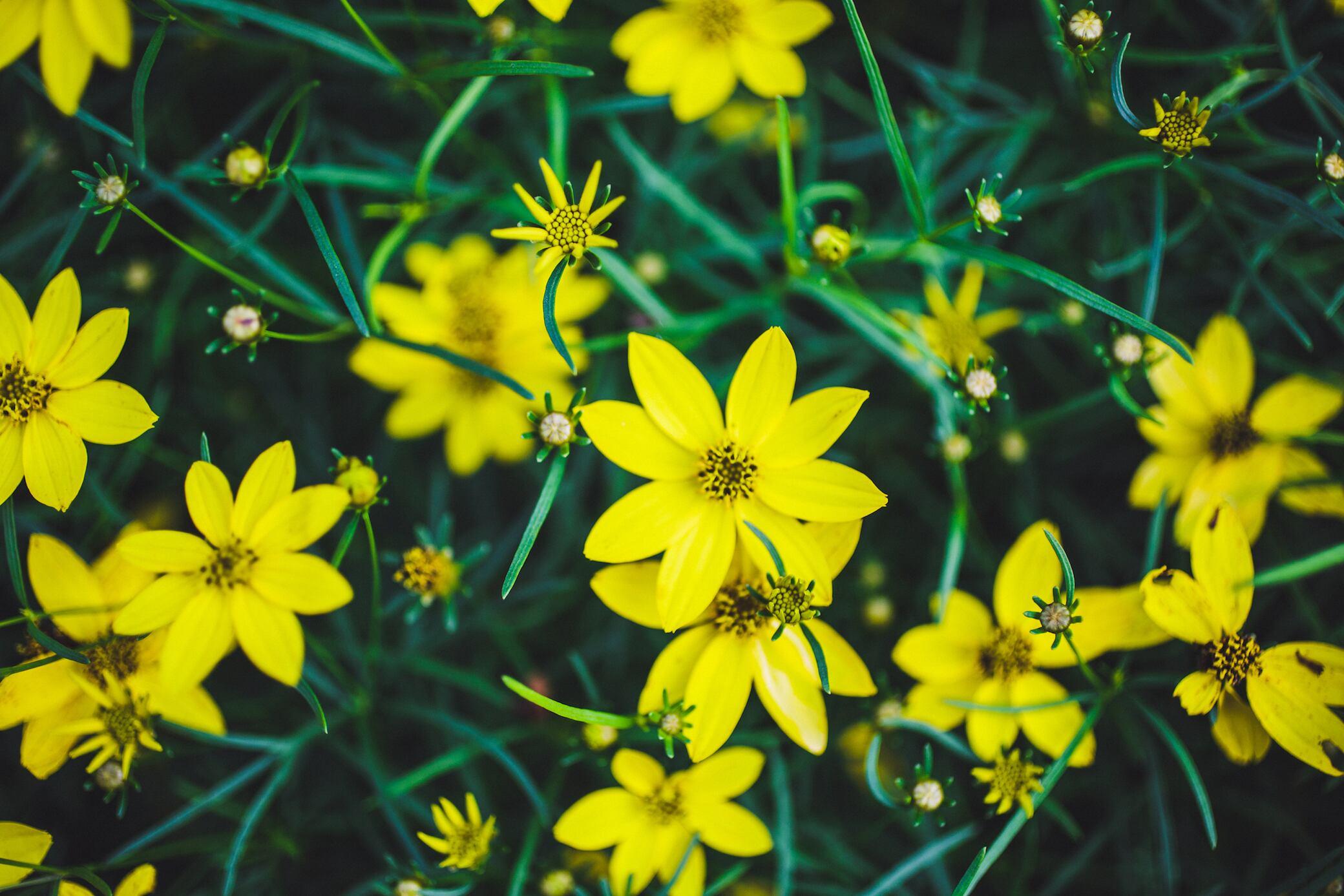Gestresste Pflanzen blühen früher