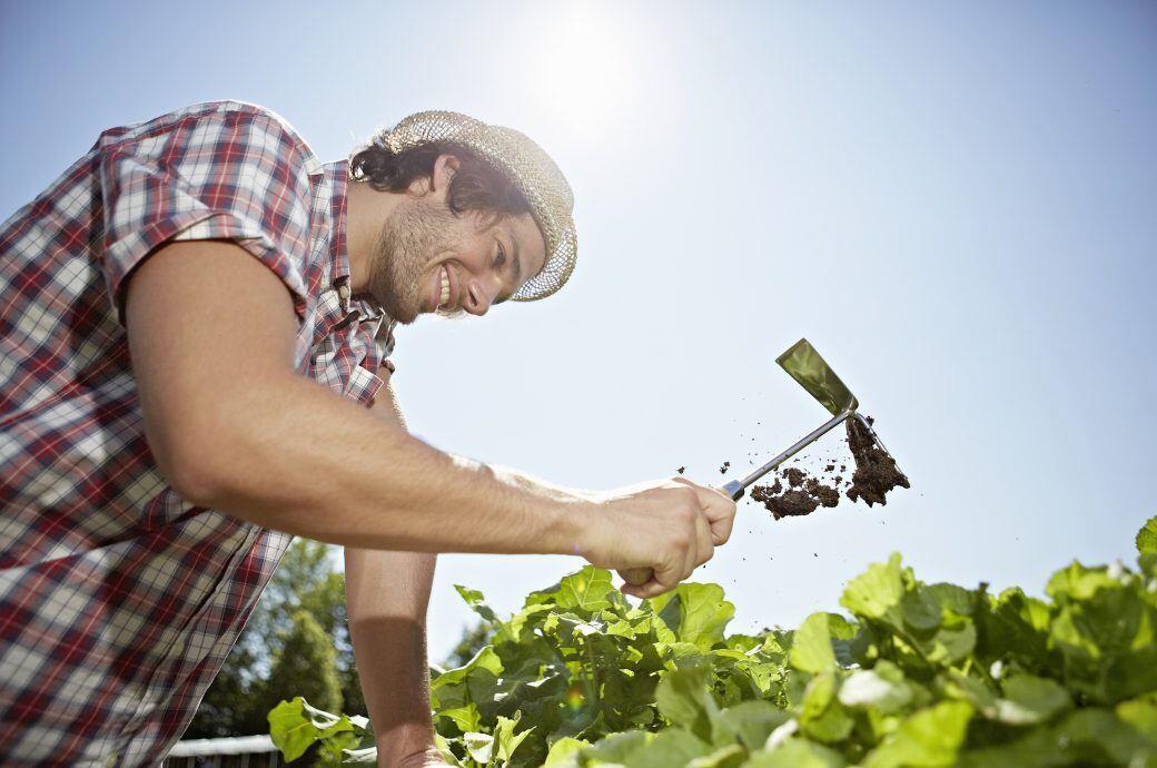 Mann hackt Gemüsebeet