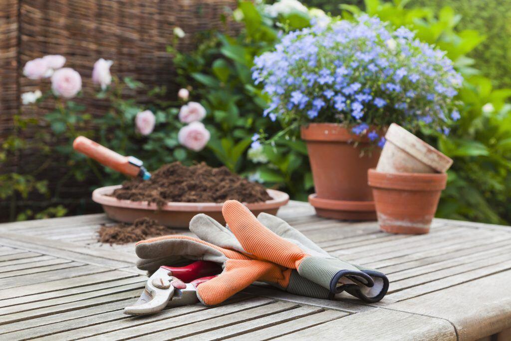 Wie viel Gärtner steckt in dir?