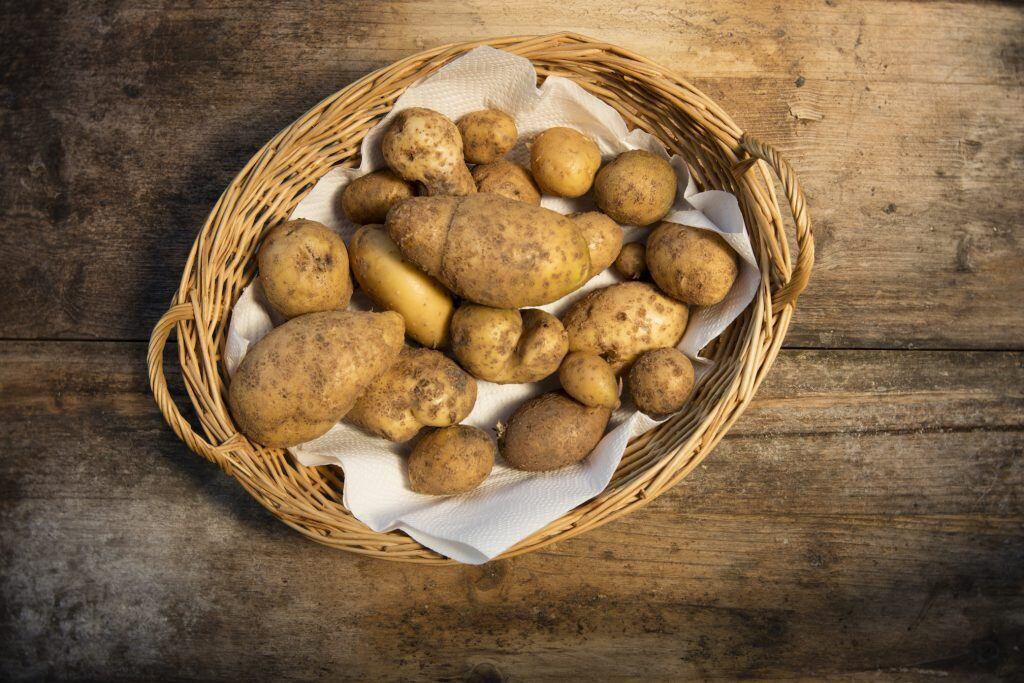 Kartoffeln aus dem Garten ernten