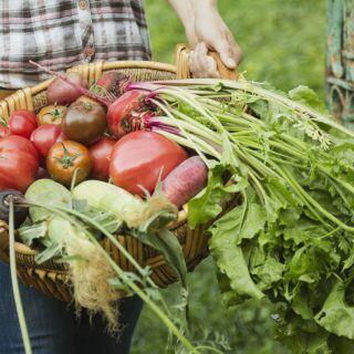 Was ist eine Fruchtfolge und was bringt sie mir im Garten?