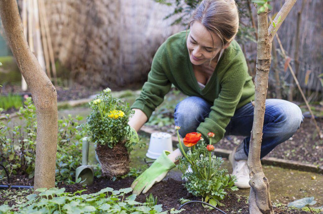 Zum Einpflanzen oder Umpflanzen sollte der Boden eine bestimmte Lochgröße haben