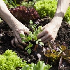 Permakultur im Garten für ertragreiche Ernte