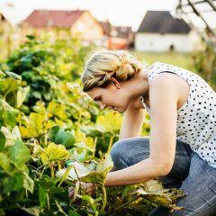 Gartenarbeiten im August