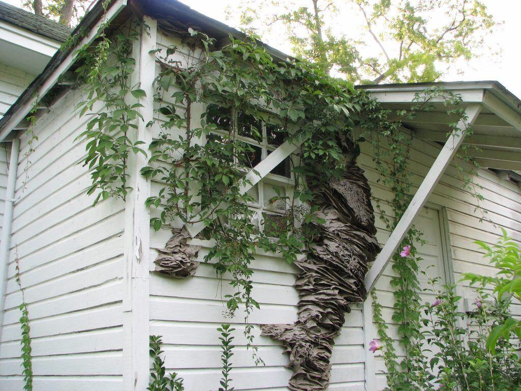 Wespennest an einer Hausfassade