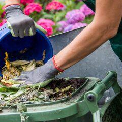 Eine Biomülltonne wird mit Abfallresten befüllt