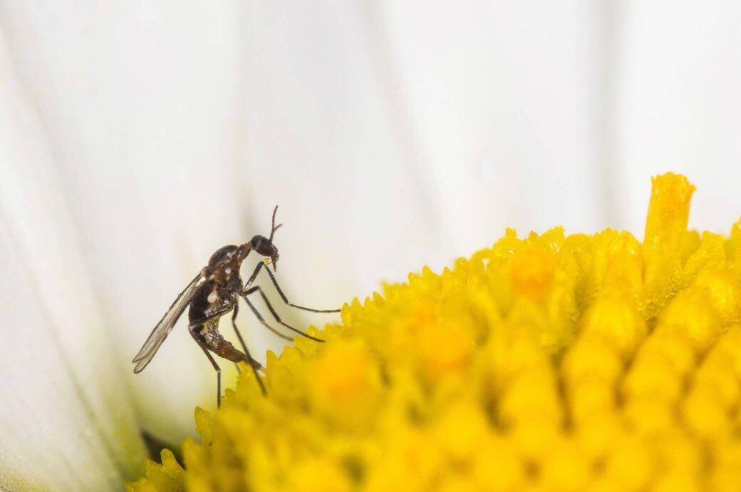 Trauermücken in Blumentöpfen loswerden