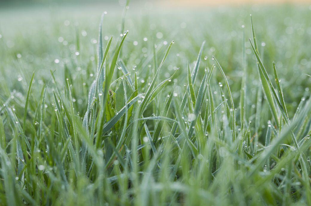 Auch nach Schauern sollten Sie Rasen gießen