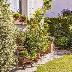 Diese Gartenpflanzen sollten Sie im Spätsommer nicht mehr düngen