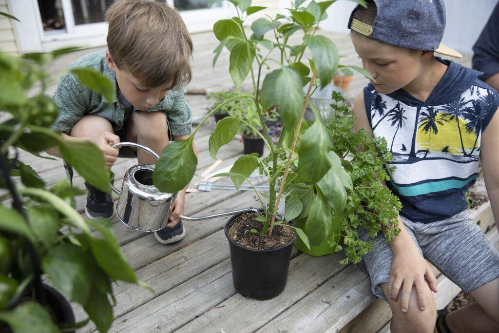 Zwei Jungen gießen eine Paprikapflanze